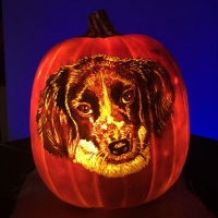 Cute dog painted on a pumpkin