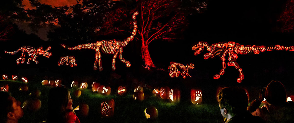 Dinosaur display and pumpkins carved with bones Illuminated