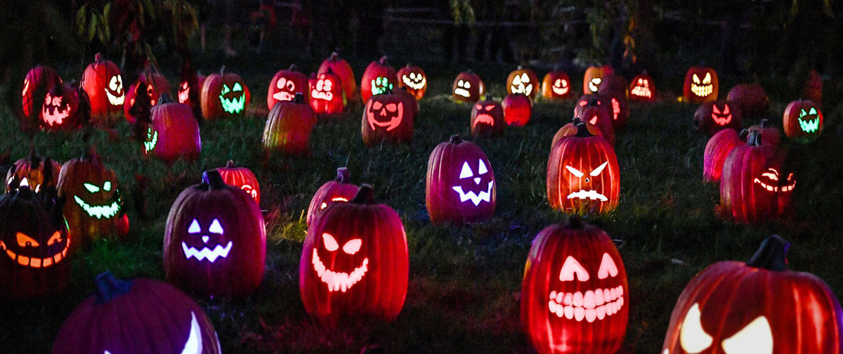 Jack O' Lanterns on display in field
