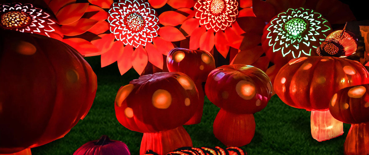 Flower & mushroom patch display illuminated in Halloween journey