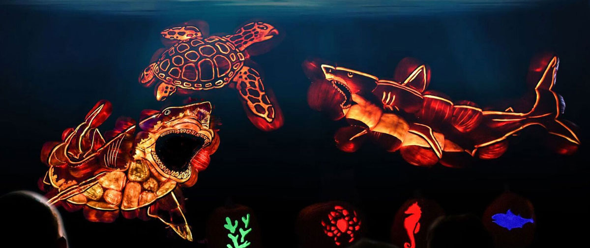 Seaworld animals Illuminated in lights including turtle and sharks